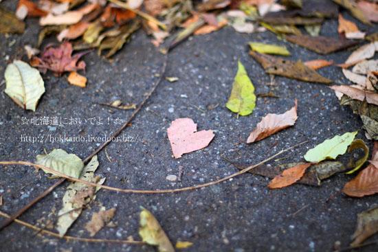ハート型の落ち葉
