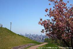 旭山記念公園の風景