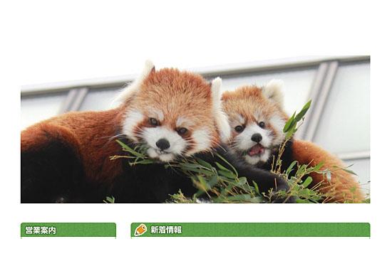 レッサーパンダの赤ちゃん「リリィ」と「ライラ」