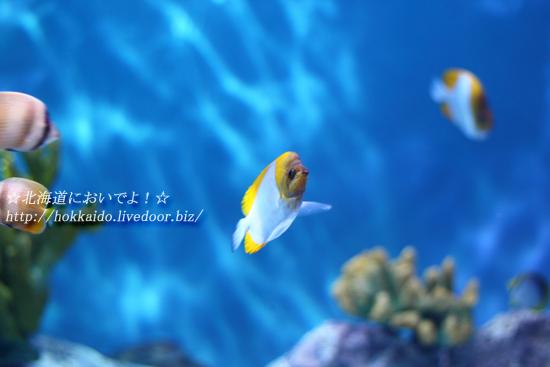 2013年4月21日(日)小樽水族館
