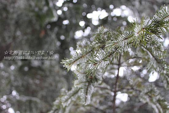 2011年3月3日(木) 真駒内公園