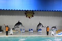 おたる水族館 イルカのショー