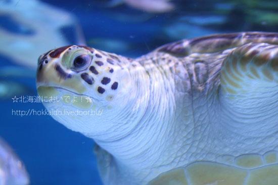 ウミガメの太郎