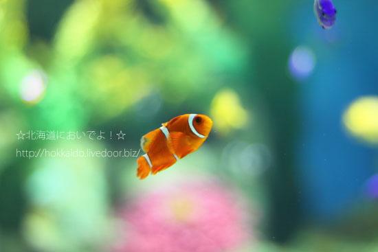 おたる水族館の魚たち