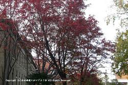 2009/10/29 札幌市資料館