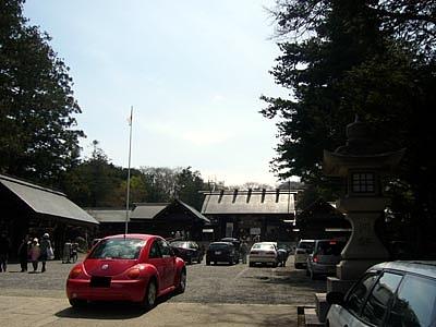 北海道神宮で花見