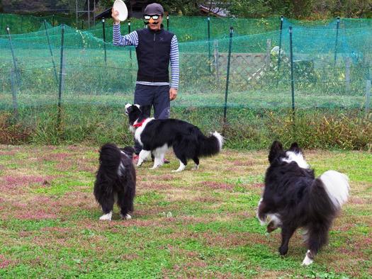 171014-05犬使い
