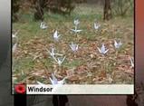 Windsor 2