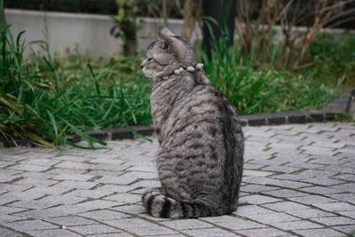 私がしゃべる猫に出会った話