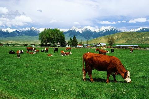 実家の土地が勝手に牧場にされかけてた話