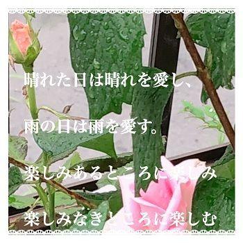 梅雨~自宅POEMU