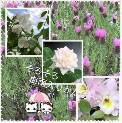 梅雨入り前の花~
