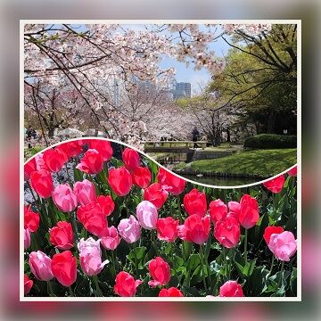 R-2 4月7日~春の風景