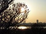 s-16:14ウメと太陽、サイクリング