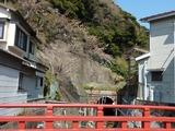 s-桜橋から桜