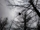 37鳥の巣