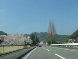 s-13:24桜の花びら