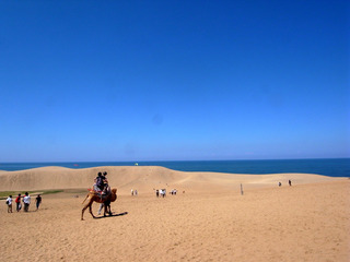 鳥取砂丘でラクダ