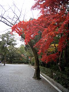 伊勢神宮 紅葉