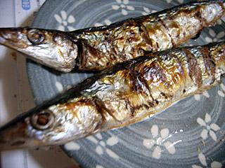 秋刀魚 さんま サンマ