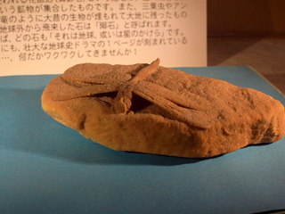 トンボの化石