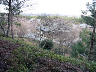 高台より(桜が綺麗なんだろうなぁ)