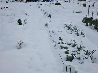 畑もすっかり雪に埋まる