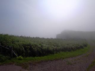 霧多布岬は霧の中