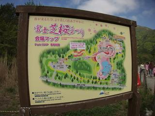 富士芝桜まつりに来ました