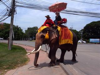 街を象が歩きます