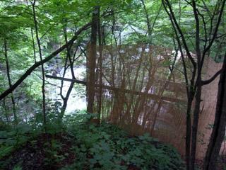 緑と渓流の間で