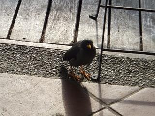食べ残しを狙う鳥