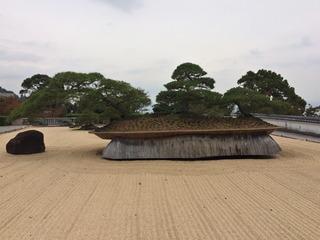 大きな盆栽