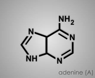 adenine-1769857_960_720