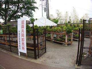 盆栽共同販売所