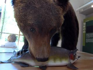 羅臼ビジターセンター 熊