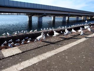 鳥だらけ@浜名湖佐久米駅