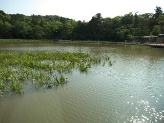 池がキレイ