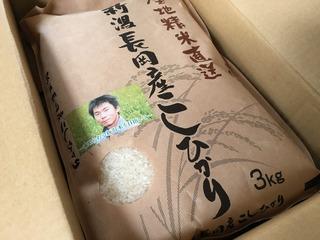 koshihikari@shoya