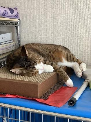 暑い日の爪とぎベッド