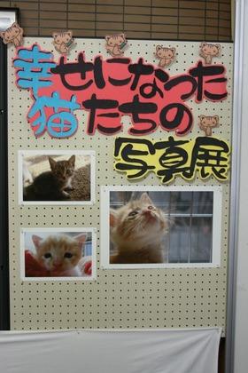 幸せになった猫たちの写真展