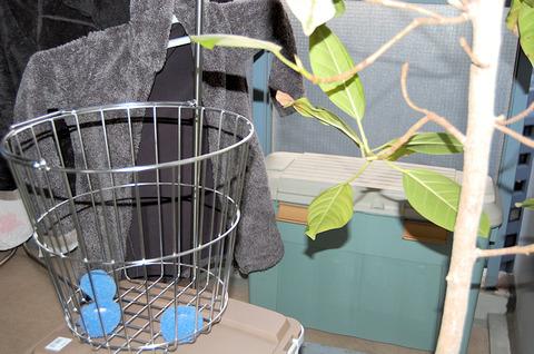 ホコリとり洗濯ボール