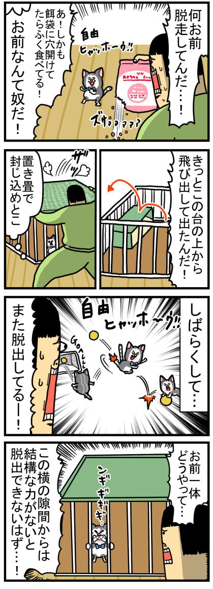 子猫5-2