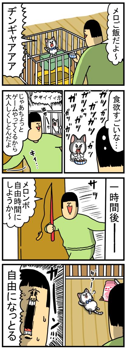 子猫5-1