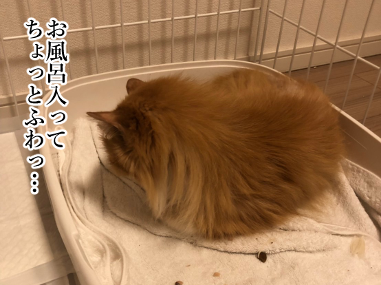 捨て猫4-4