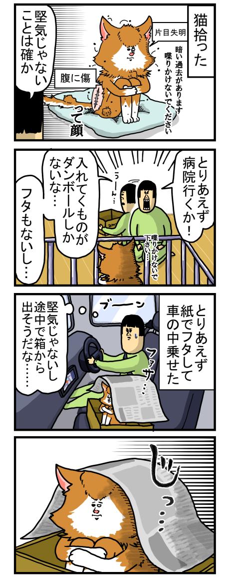 捨て猫1-1