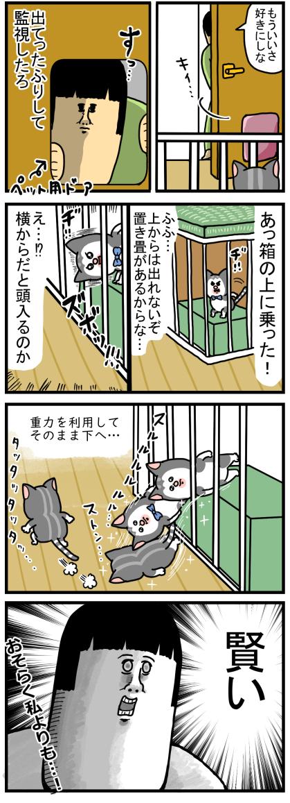 子猫5-3
