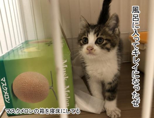 子猫1-4