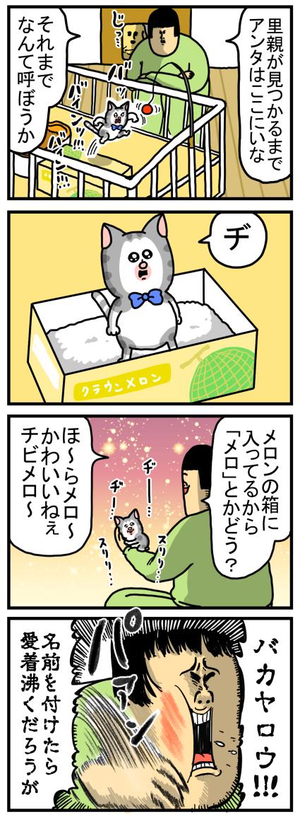 子猫3-1