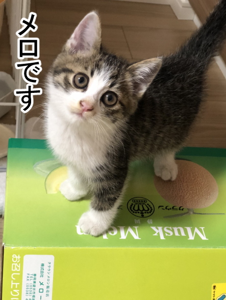 子猫3-5